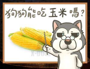b 玉米拷貝