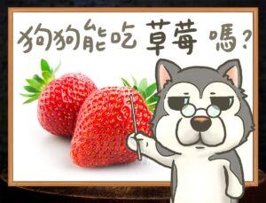 b 草莓拷貝