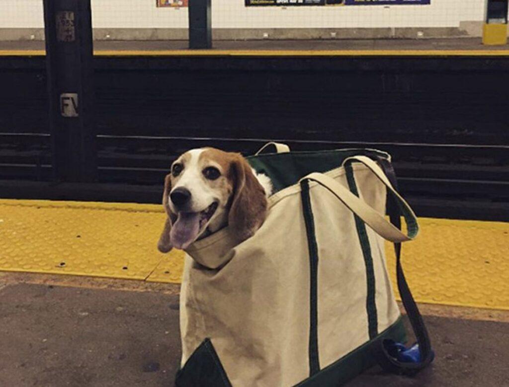 b bagheader