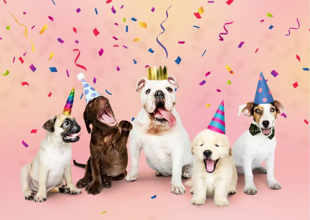 b birthdaydogs