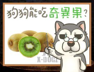 b kiwi