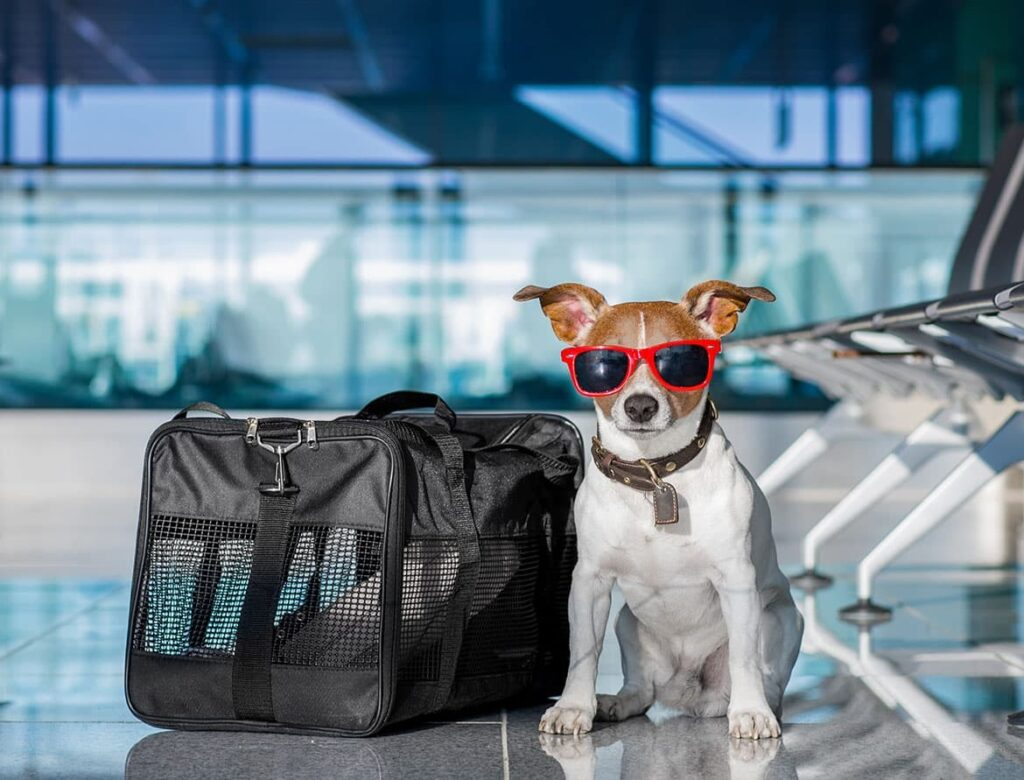 b pet travel agency with traveling with pets seaborne airlines 5