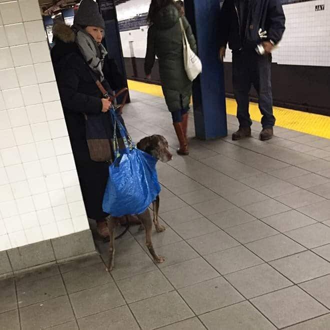 nyc subway dog1