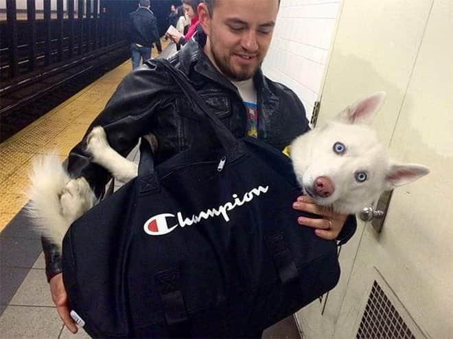 nyc subway dog10