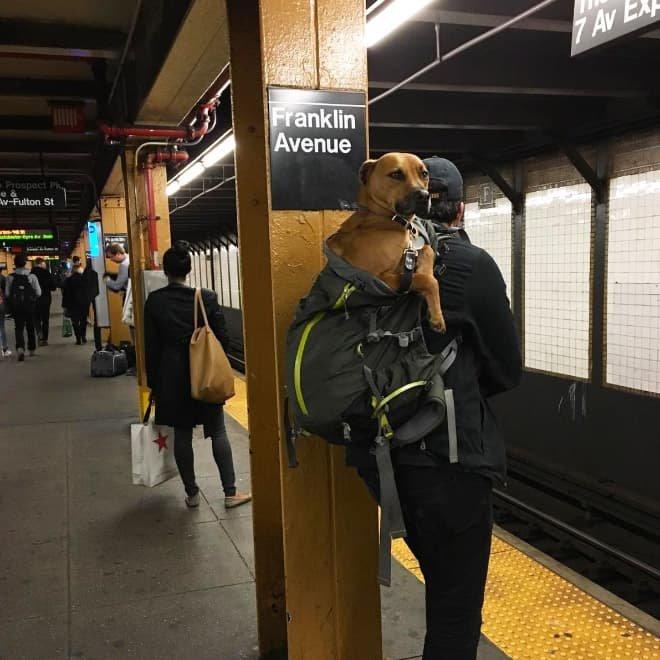 nyc subway dog11