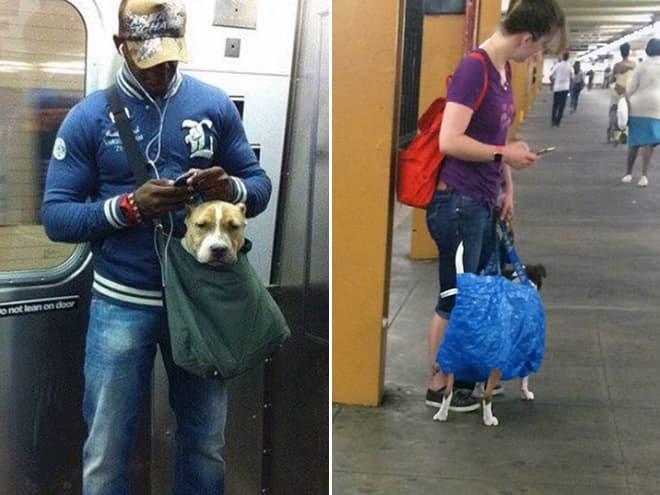 nyc subway dog12