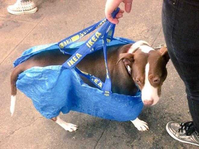 nyc subway dog13