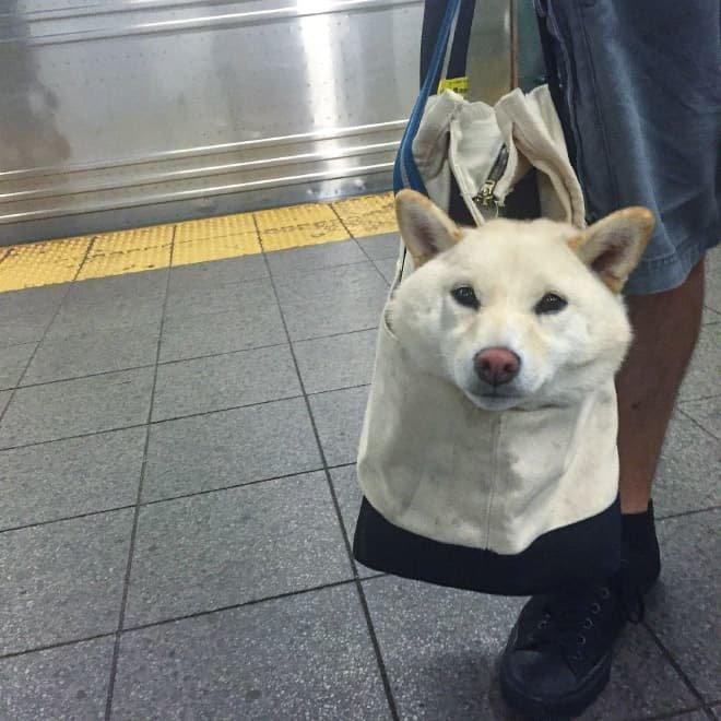 nyc subway dog16