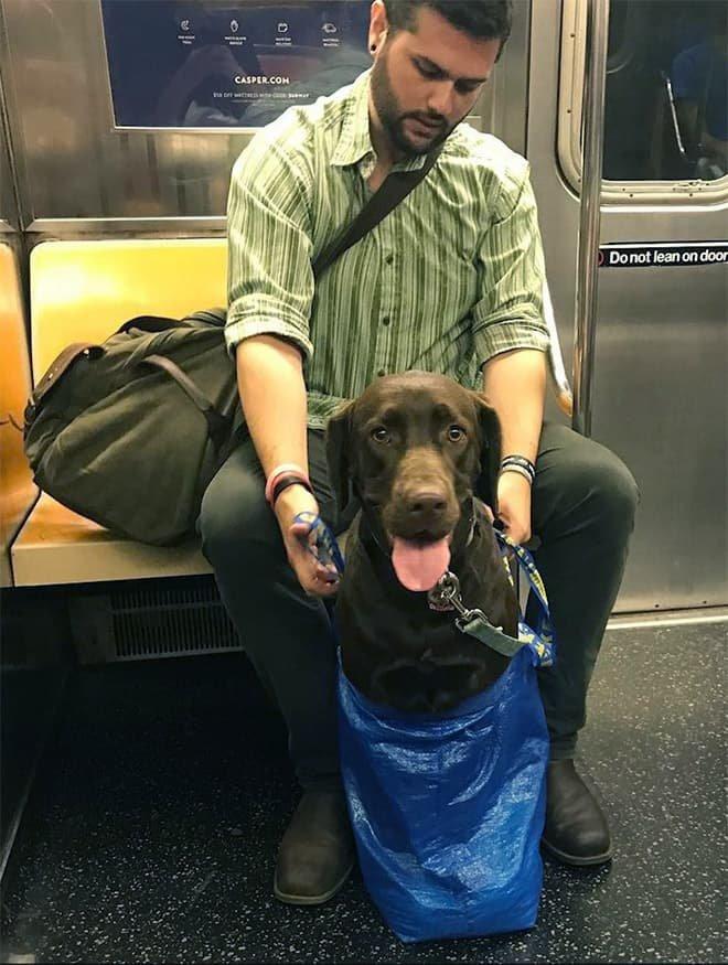 nyc subway dog17
