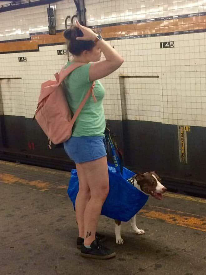 nyc subway dog2