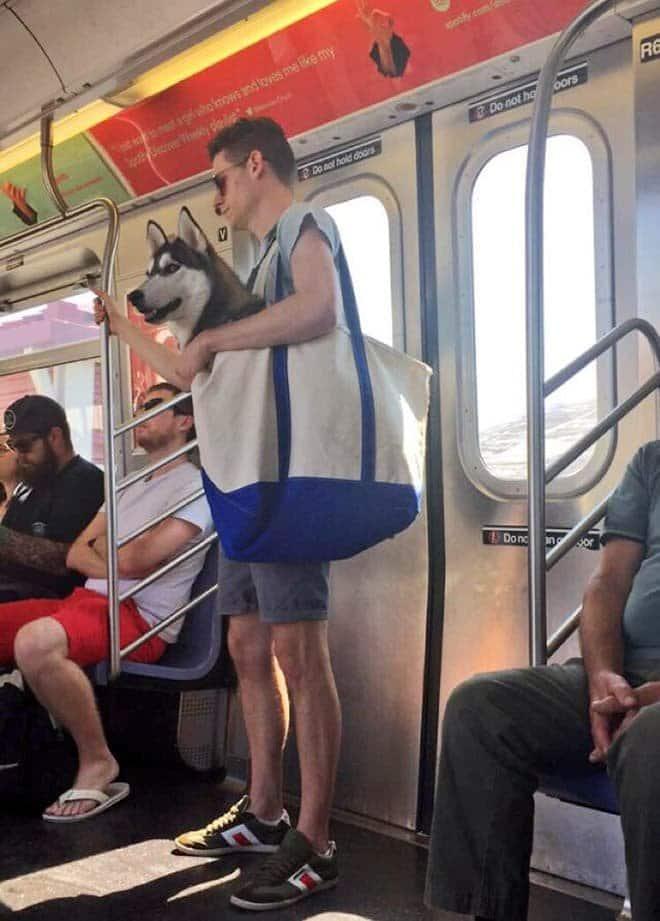 nyc subway dog3