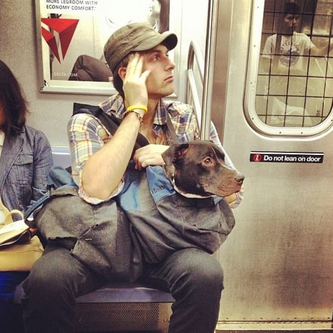 nyc subway dog4