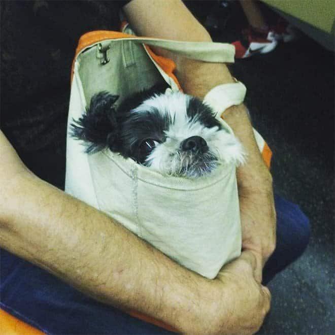 nyc subway dog6