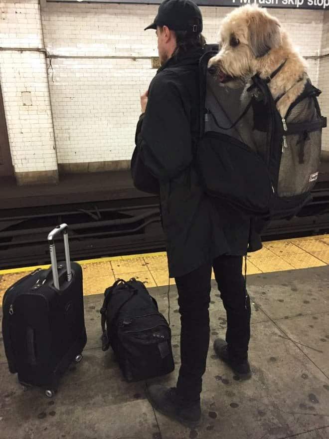 nyc subway dog7