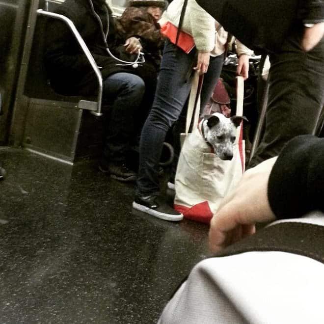 nyc subway dog8