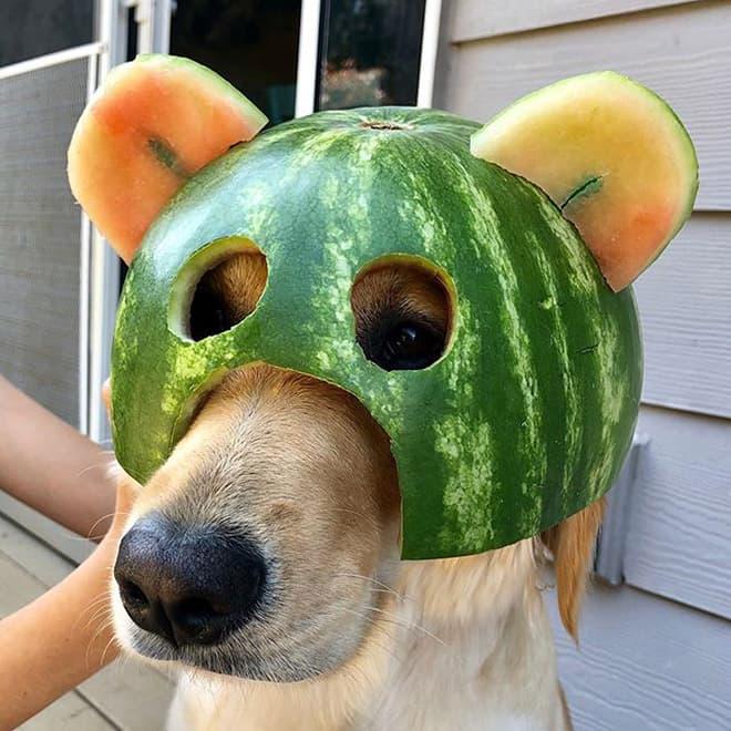 watermelon hats1