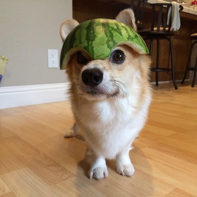 watermelon hats12