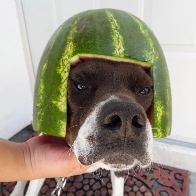watermelon hats13