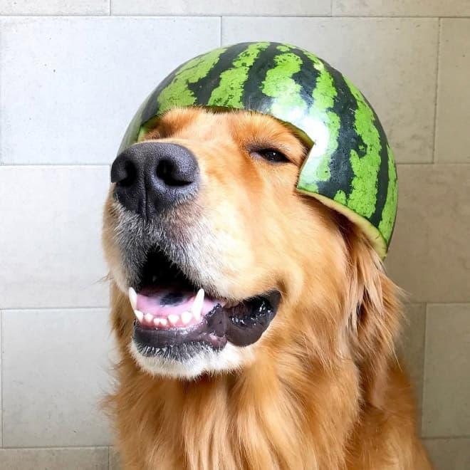 watermelon hats14