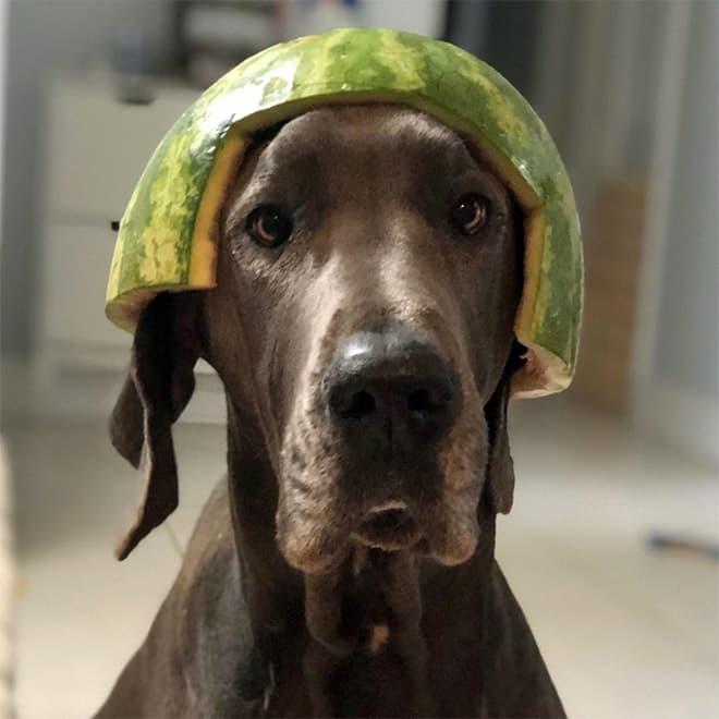 watermelon hats17