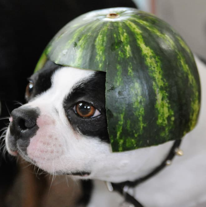 watermelon hats18