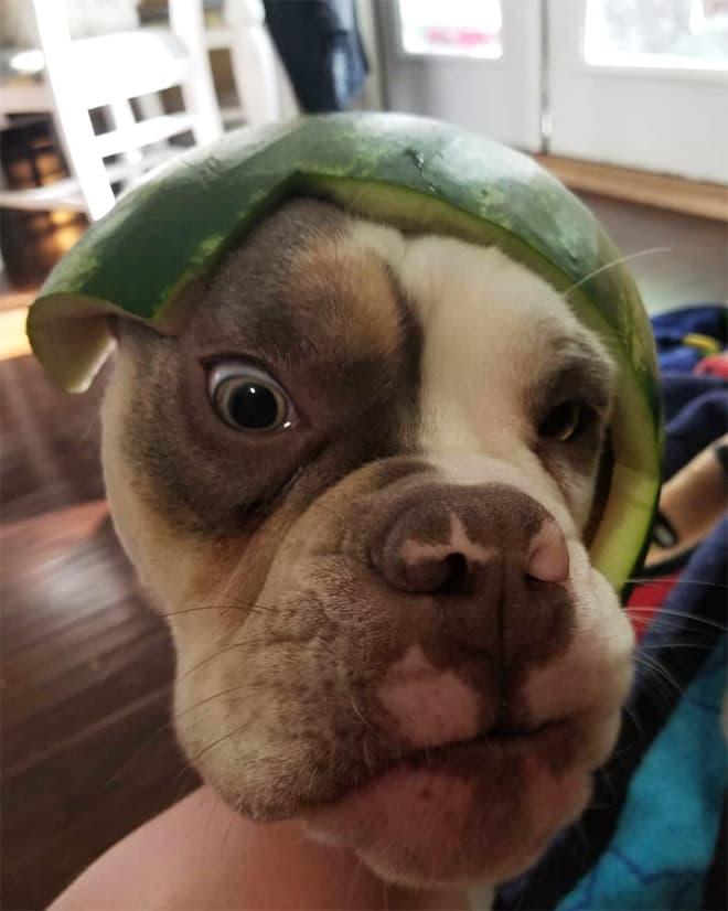 watermelon hats19