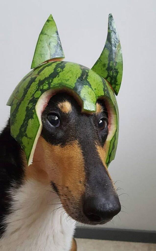 watermelon hats2