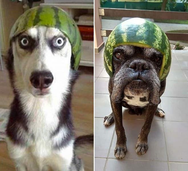 watermelon hats3