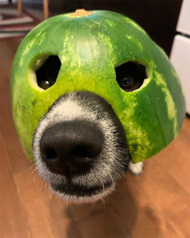 watermelon hats4