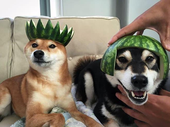 watermelon hats7