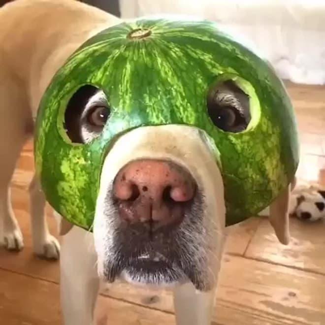 watermelon hats9